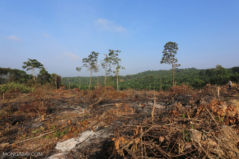 Forest clearing for oil palm [riau_0025]