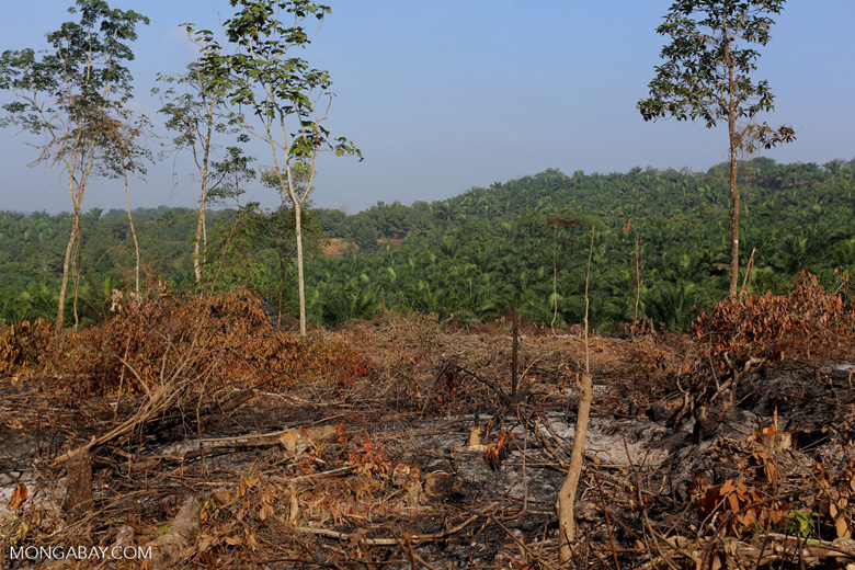 Forest clearing for oil palm [riau_0027]