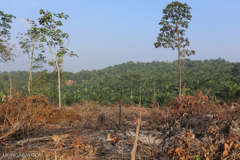 Forest clearing for oil palm [riau_0029]