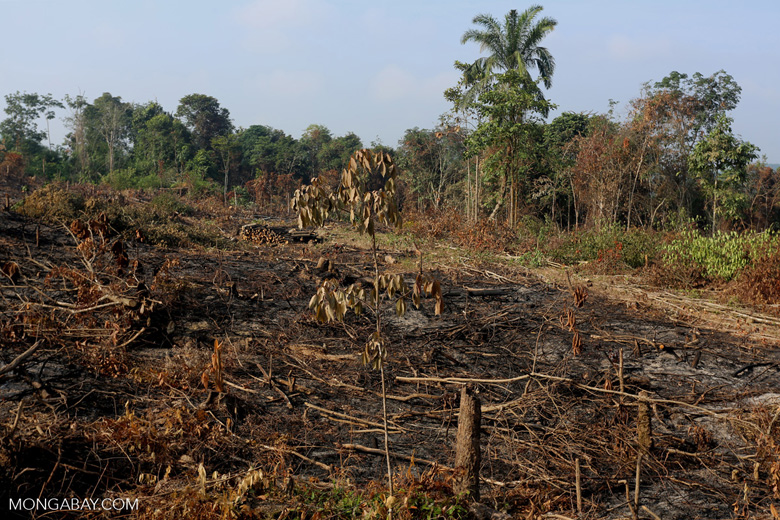 Forest clearing for oil palm [riau_0030]