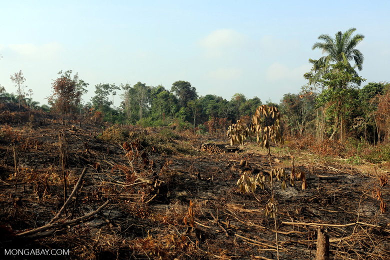 Forest clearing for oil palm [riau_0031]