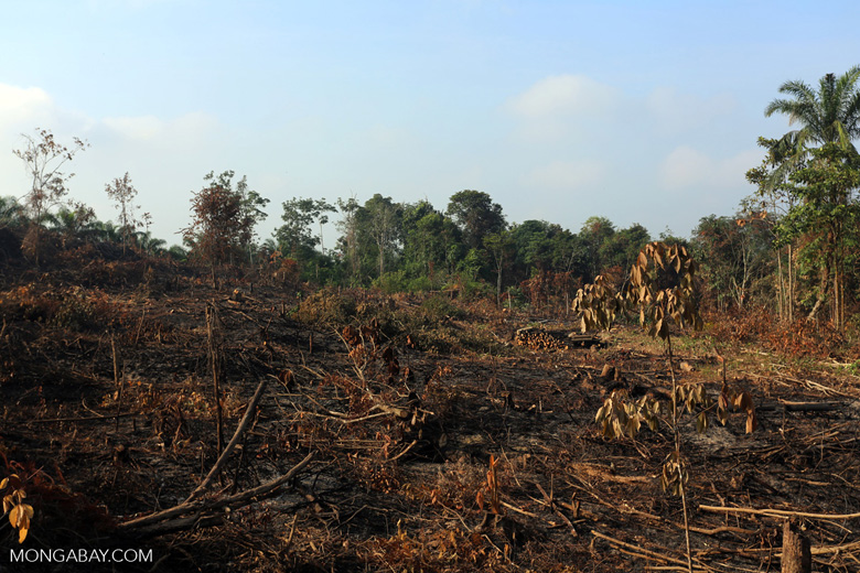 Forest clearing for oil palm [riau_0032]