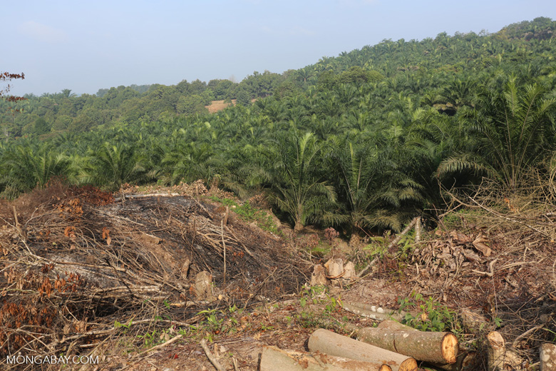 Forest clearing for oil palm [riau_0033]
