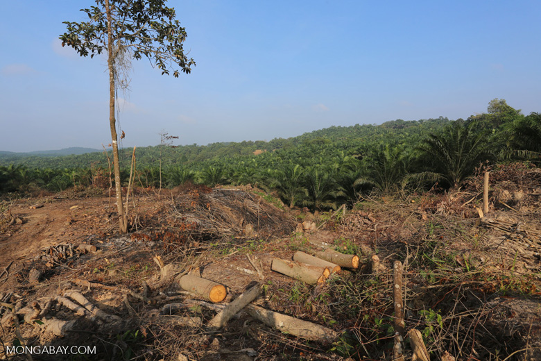 Forest clearing for oil palm [riau_0034]