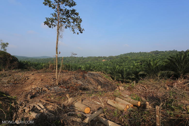 Forest clearing for oil palm [riau_0035]