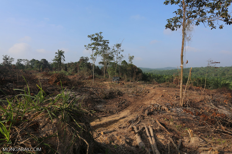 Forest clearing for oil palm [riau_0036]