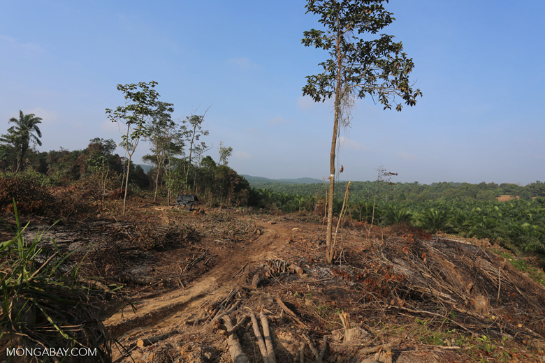 Forest clearing for oil palm [riau_0038]