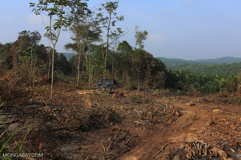 Forest clearing for oil palm [riau_0039]