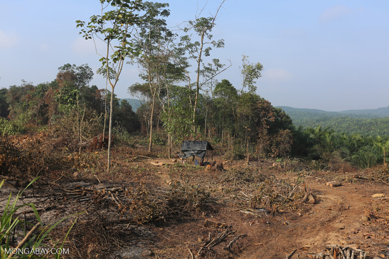 Forest clearing for oil palm [riau_0040]