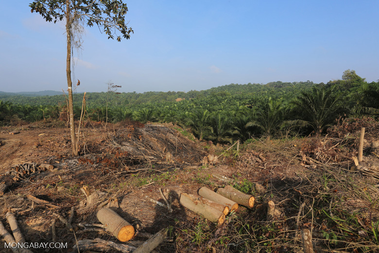 Forest clearing for oil palm [riau_0044]