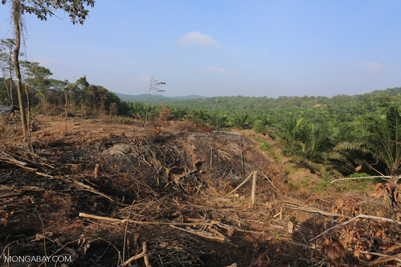 Forest clearing for oil palm [riau_0046]