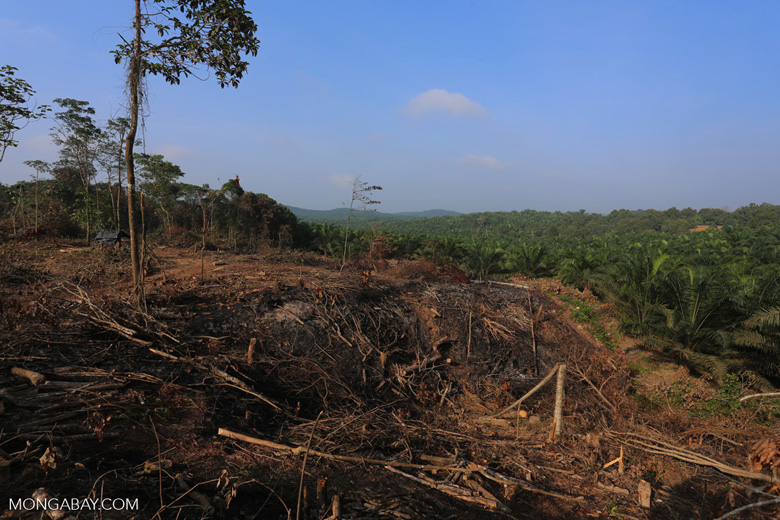 Forest clearing for oil palm [riau_0047]