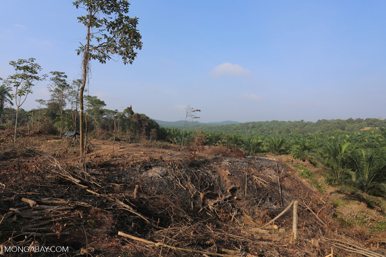 Forest clearing for oil palm [riau_0048]