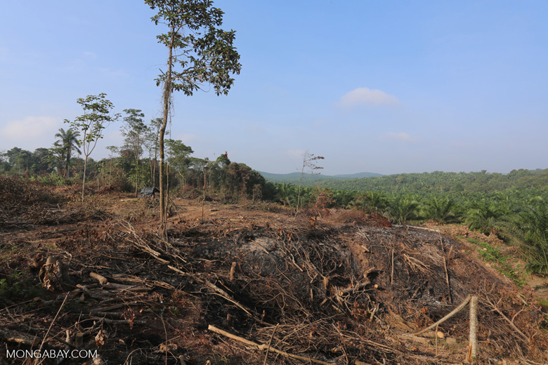 Forest clearing for oil palm [riau_0049]