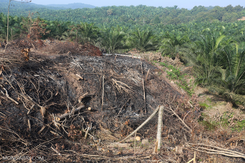 Forest clearing for oil palm [riau_0051]
