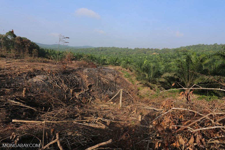 Forest clearing for oil palm [riau_0053]
