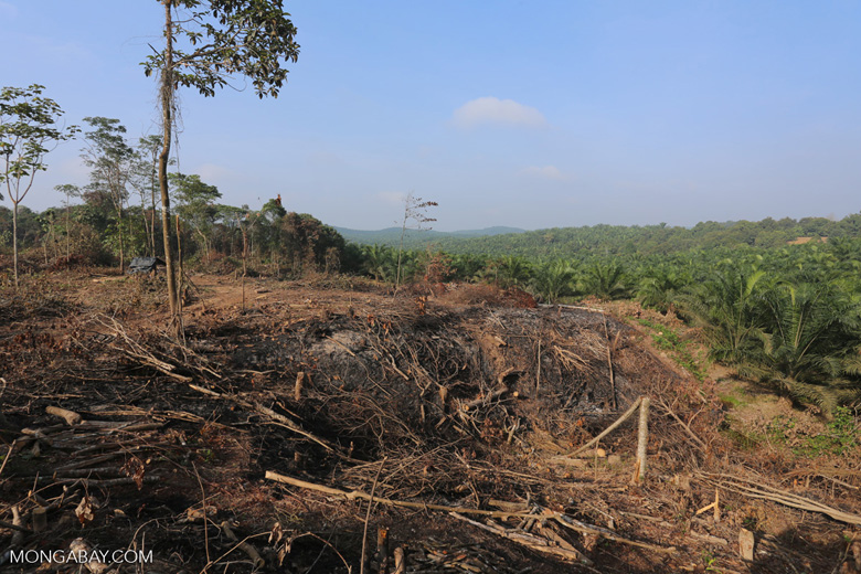 Forest clearing for oil palm [riau_0054]
