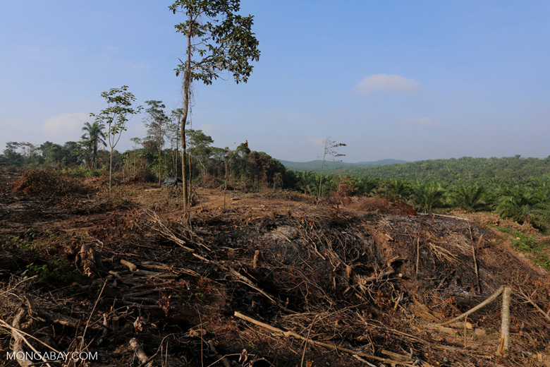 Forest clearing for oil palm [riau_0055]