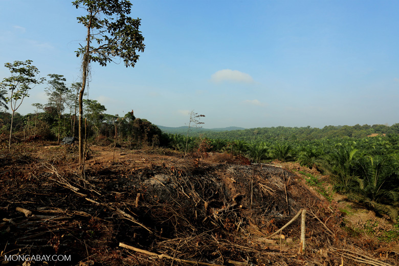 Forest clearing for oil palm [riau_0056]