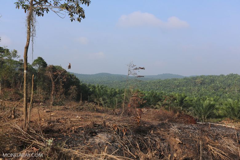 Forest clearing for oil palm [riau_0057]