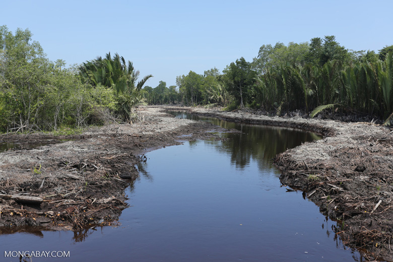 Peatland drainage canal