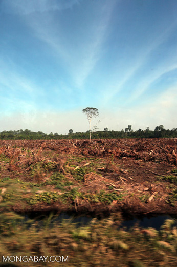 Peatlands deforestation for oil palm [riau_0070]