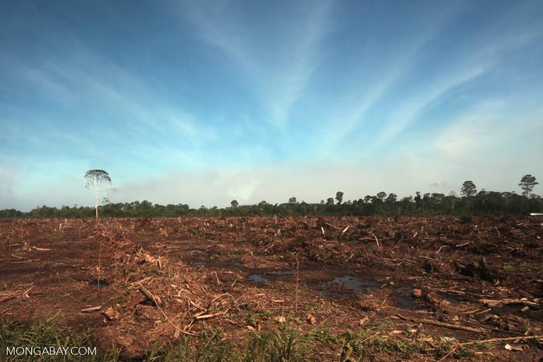 Peatlands deforestation for oil palm [riau_0073]