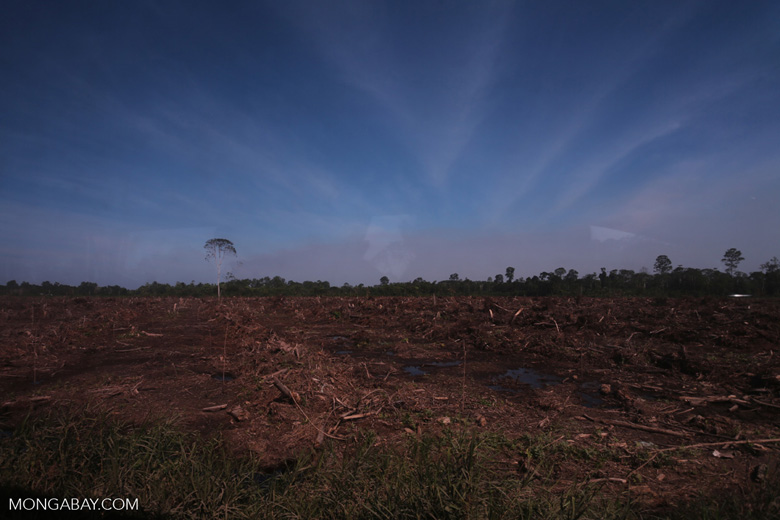 Peatlands deforestation for oil palm [riau_0074]