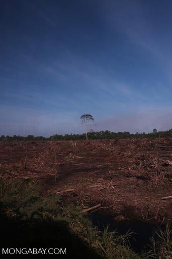 Peatlands deforestation for oil palm [riau_0075]