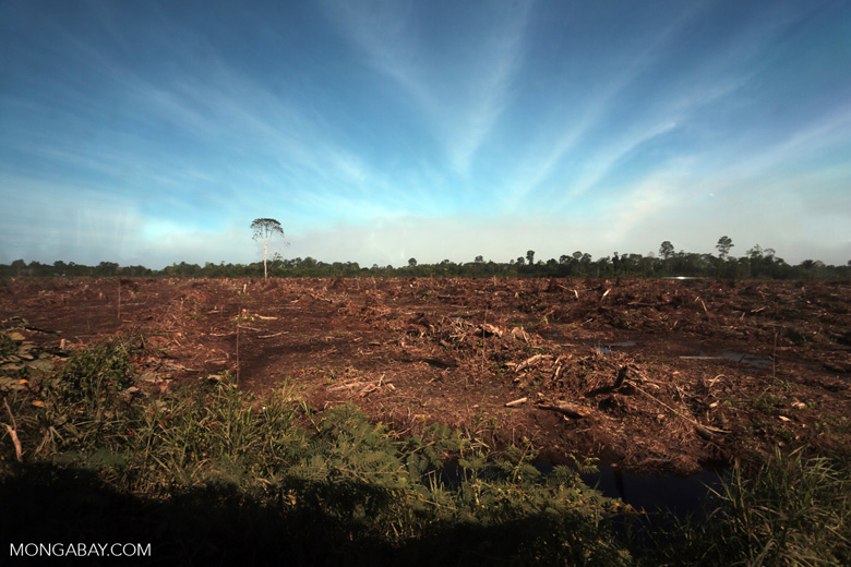 Peatlands deforestation for oil palm