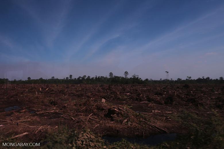 Peatlands deforestation for oil palm [riau_0079]