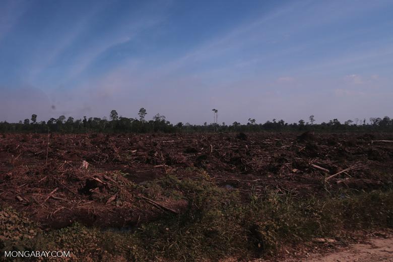 Peatlands deforestation for oil palm [riau_0080]