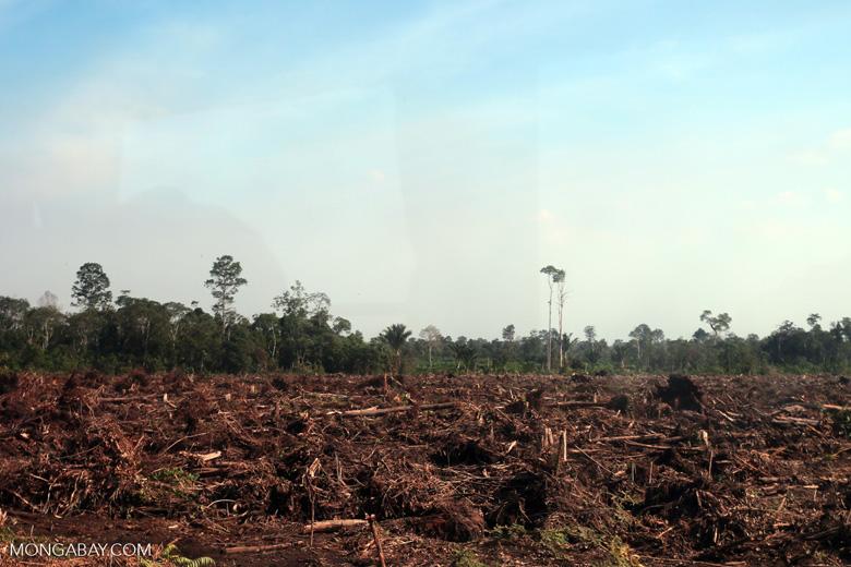 Peatlands deforestation for oil palm [riau_0082]