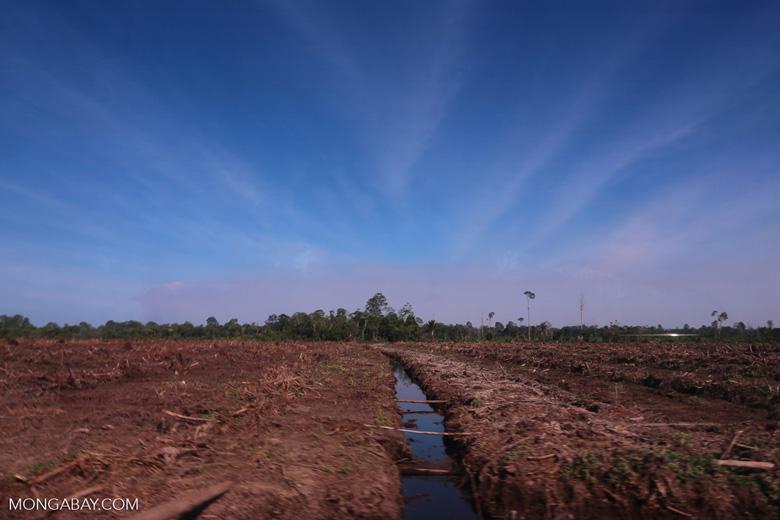 Peatlands deforestation for oil palm [riau_0088]