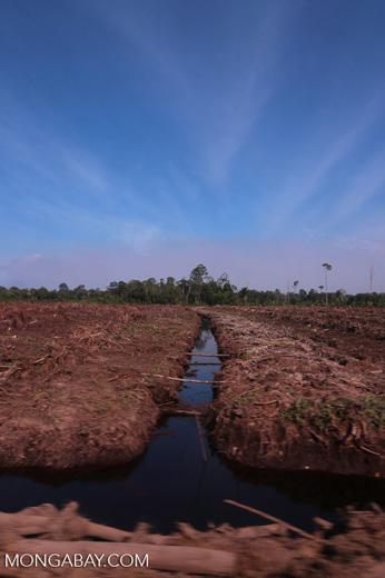 Peatlands deforestation for oil palm [riau_0090]