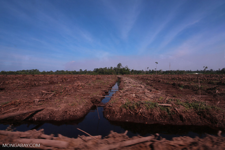 Peatlands deforestation for oil palm [riau_0091]