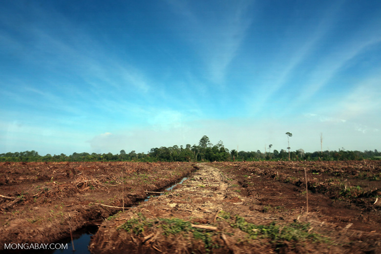Peatlands deforestation for oil palm [riau_0093]