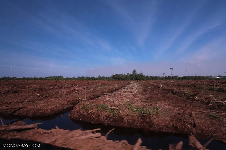 Peatlands deforestation for oil palm [riau_0094]