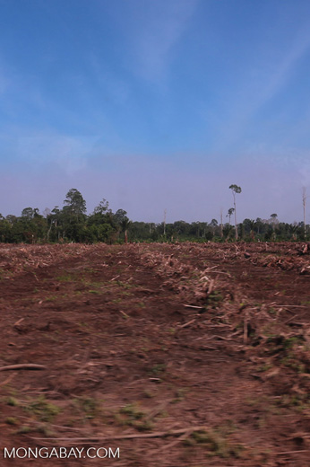 Peatlands deforestation for oil palm [riau_0096]