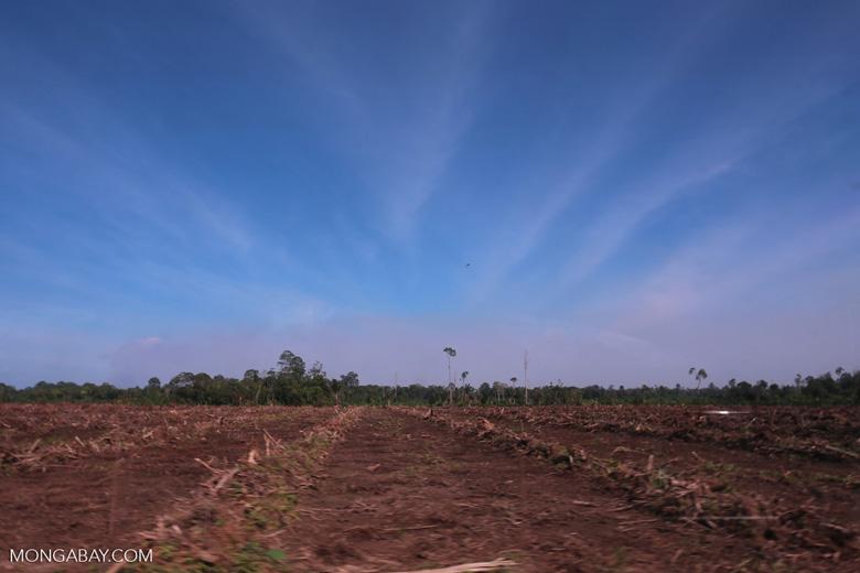 Peatlands deforestation for oil palm [riau_0098]