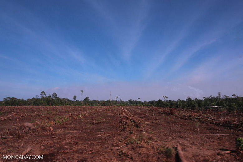 Peatlands deforestation for oil palm [riau_0109]
