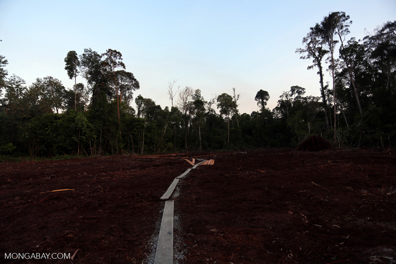 Peat forest cut down by the Indonesian government [riau_0183]