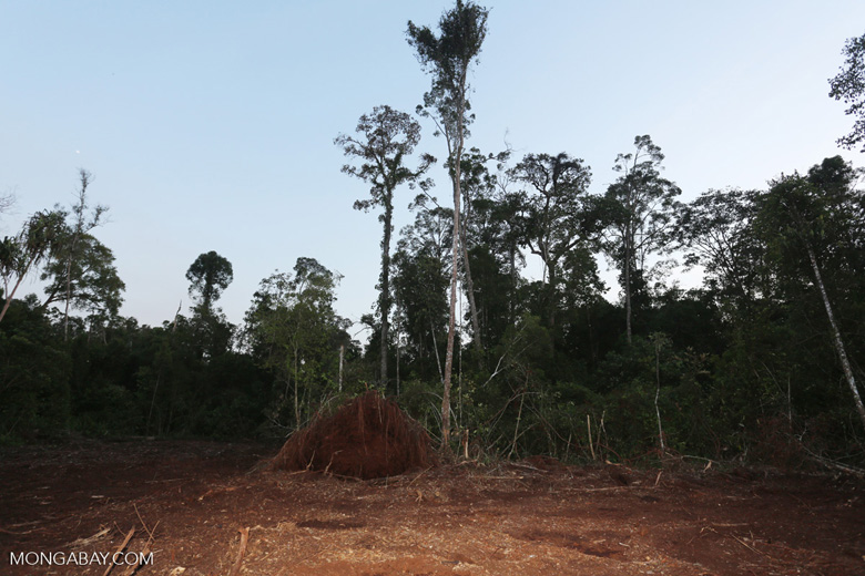 Peat forest cut down by the Indonesian government [riau_0189]