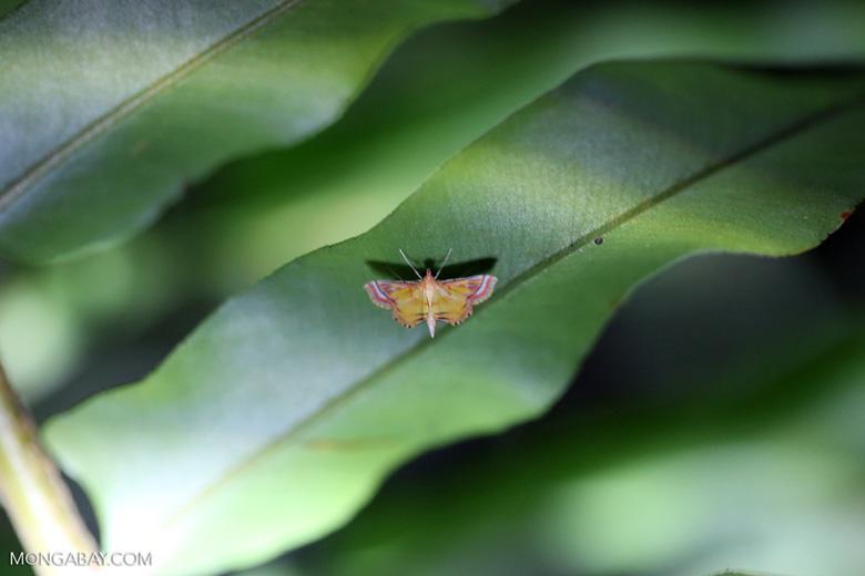 Moth [riau_0226]