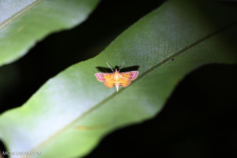 Moth [riau_0227]