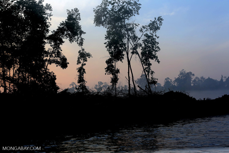 Sunset over a deforested area [riau_0299]