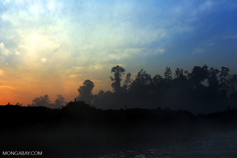 Sunset over a deforested area [riau_0309]