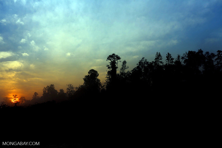 Sunset over a deforested area [riau_0316]