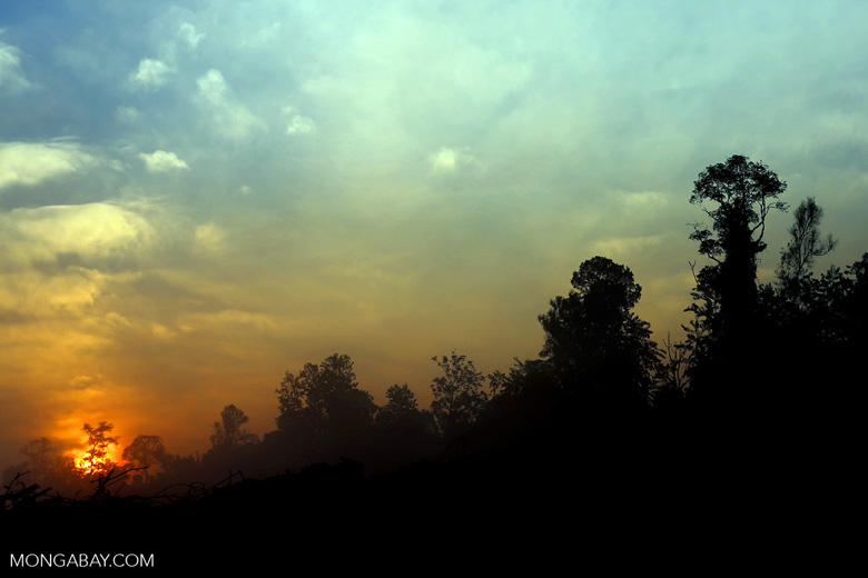 Sunset over a deforested area [riau_0317]