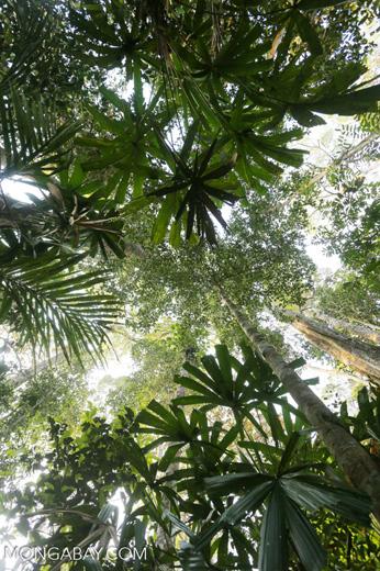 Peat forest in Riau [riau_0346]